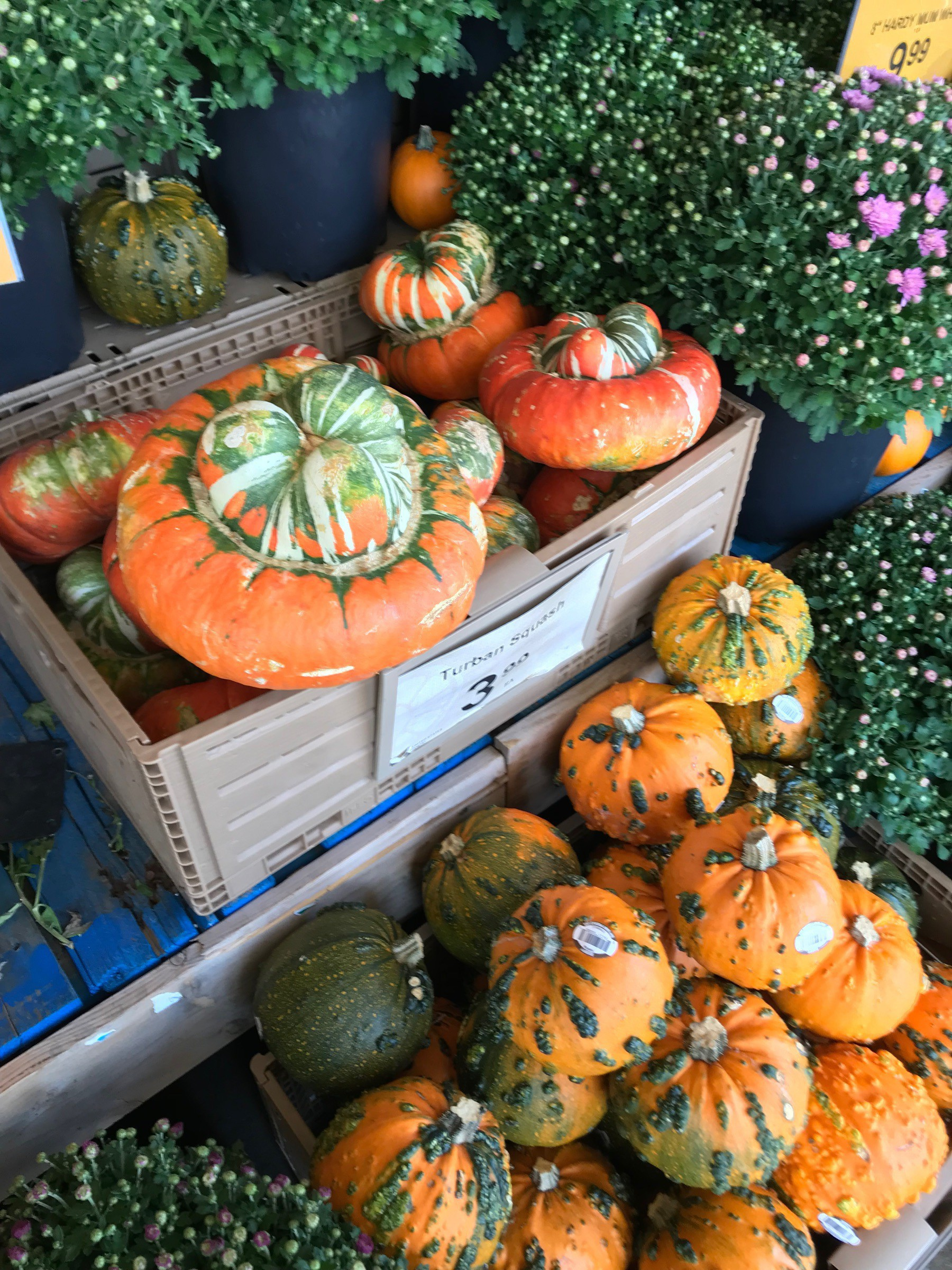 pumpkins and gourds in an exterior display at the market