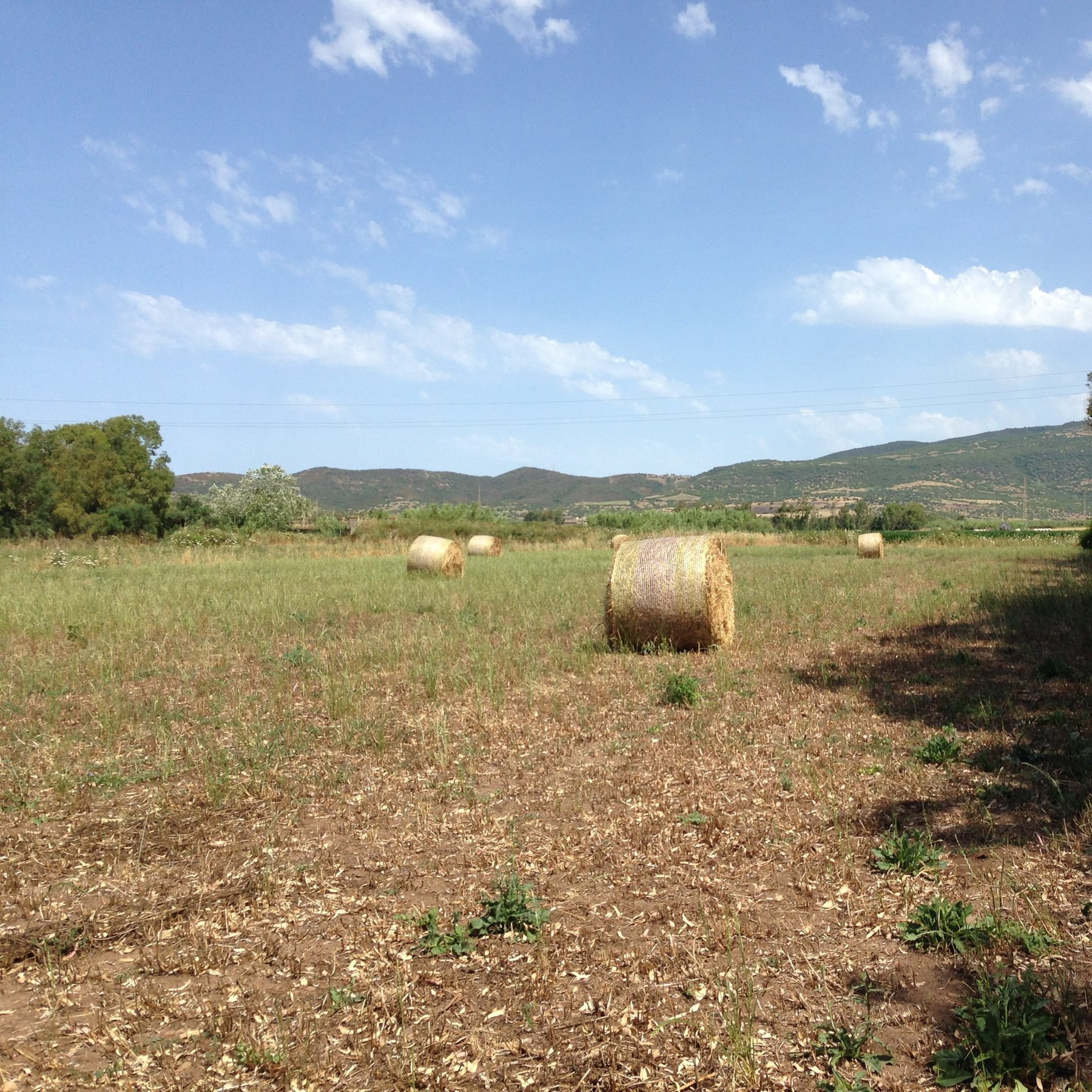 field of baled hay